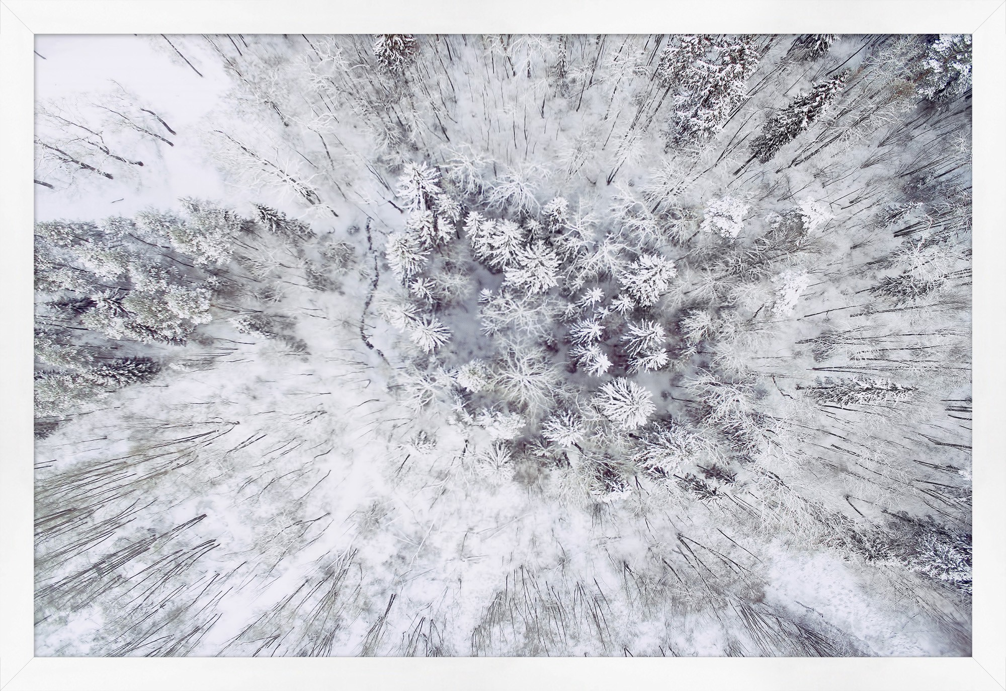 Framed art piece showing an aerial view of winter forest